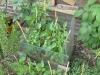 groene-peper-tuin