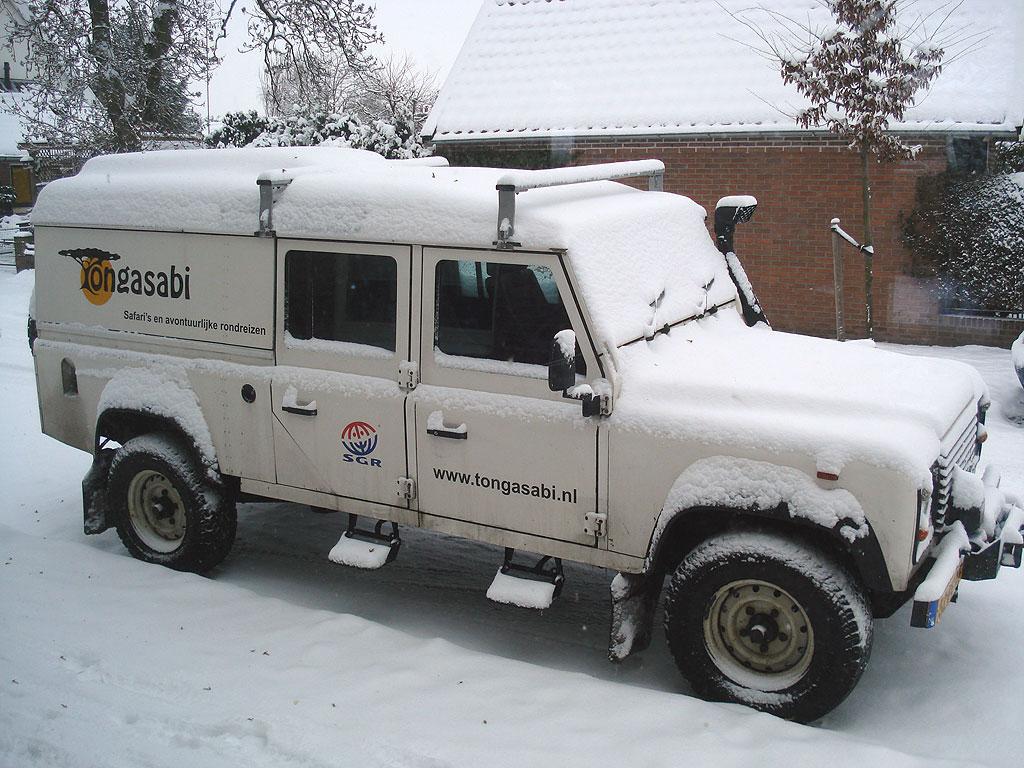 Kanga in the snow